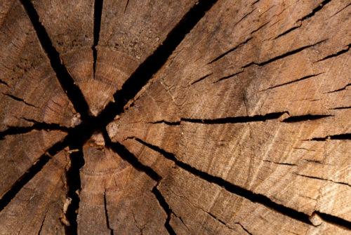 TN_Tree_Ring_Texture